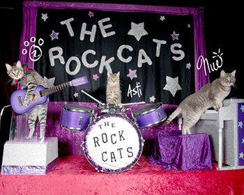 THE AMAZING ACRO-CATS AND THE ROCK CATS